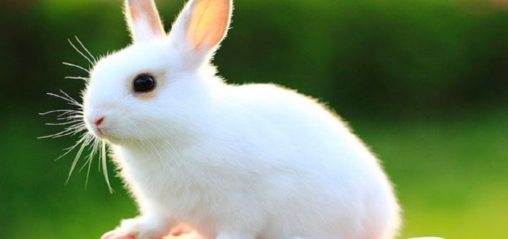 Baby Rabbit Pictures