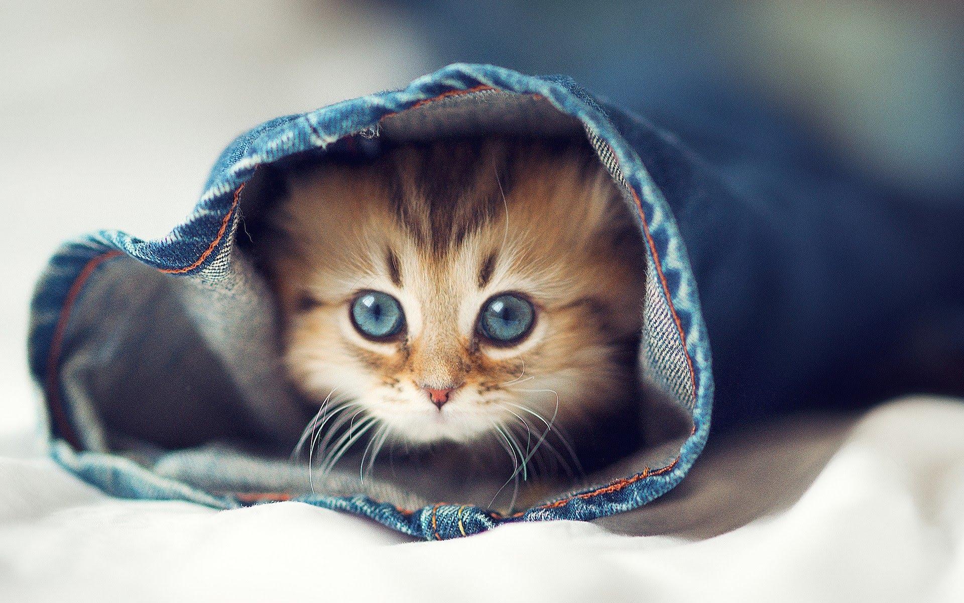 Cute Kitten Pics_01